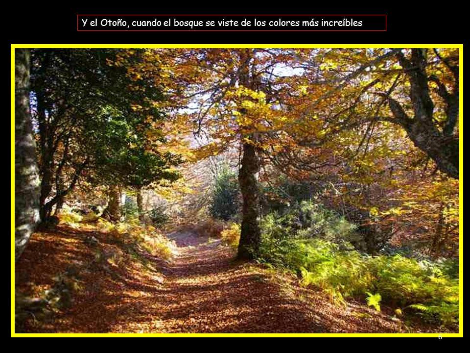Y el Otoño, cuando el bosque se viste de los colores más increíbles