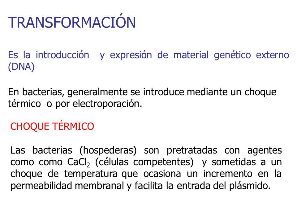 TRANSFORMACIÓN Es la introducción y expresión de material genético externo (DNA)