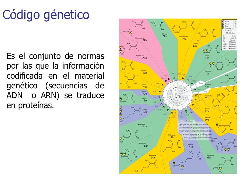 Código génetico