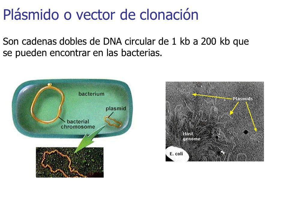 Plásmido o vector de clonación