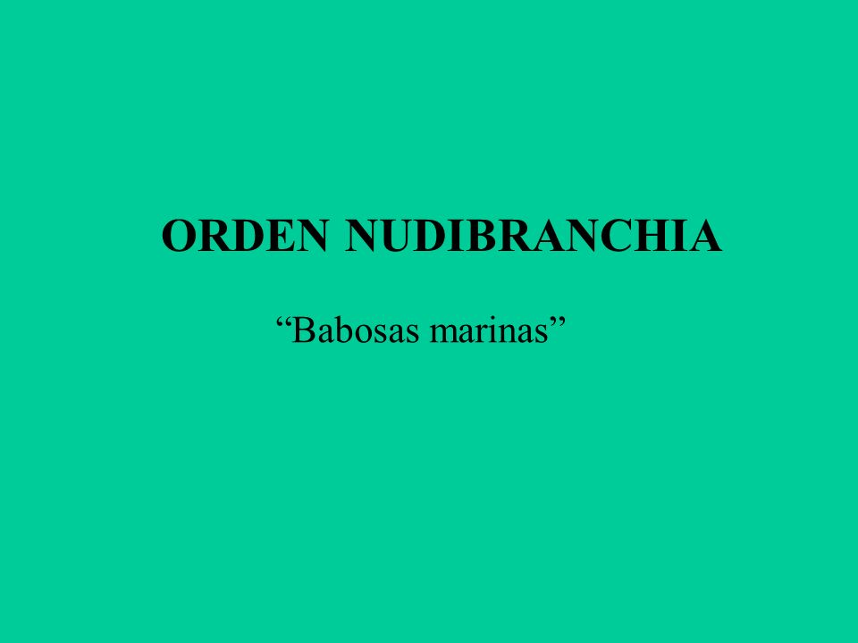ORDEN NUDIBRANCHIA Babosas marinas
