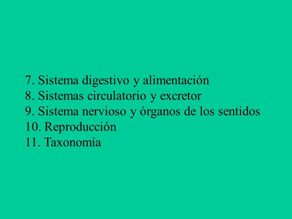 7. Sistema digestivo y alimentación