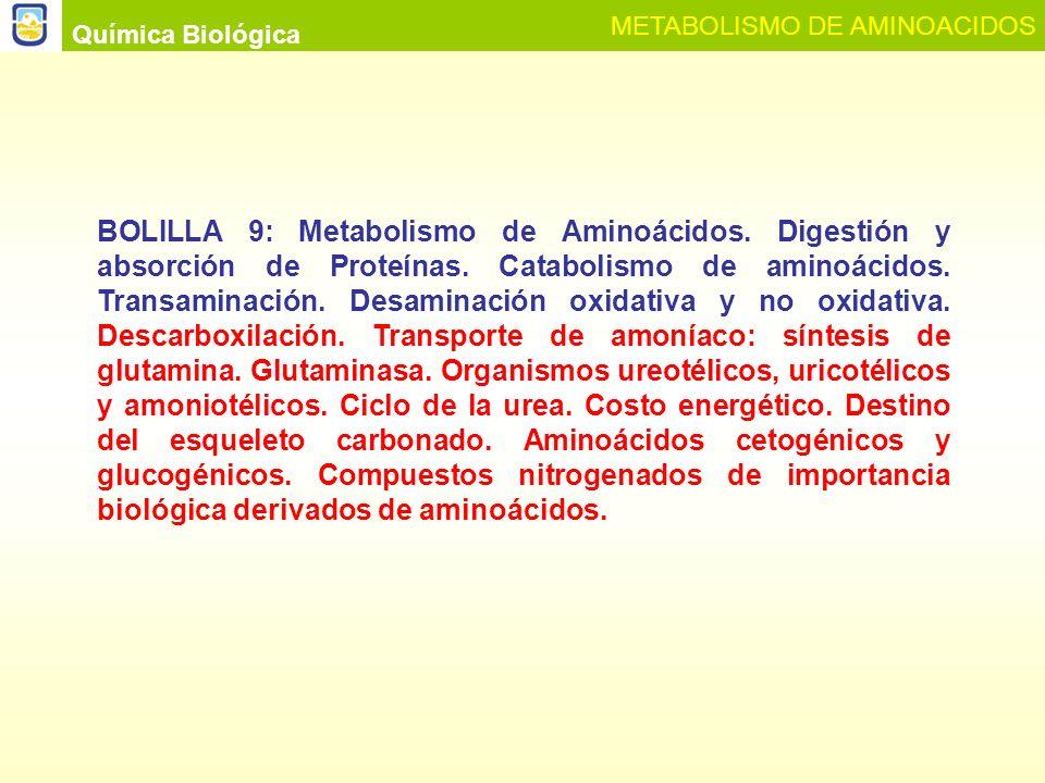 Química Biológica METABOLISMO DE AMINOACIDOS.