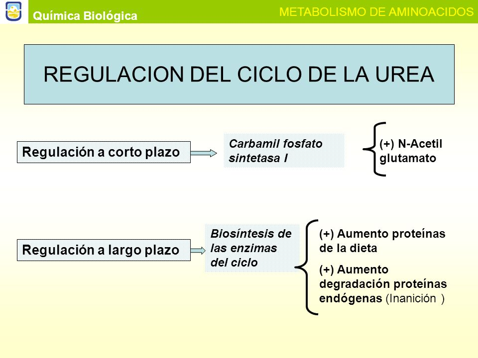 REGULACION DEL CICLO DE LA UREA