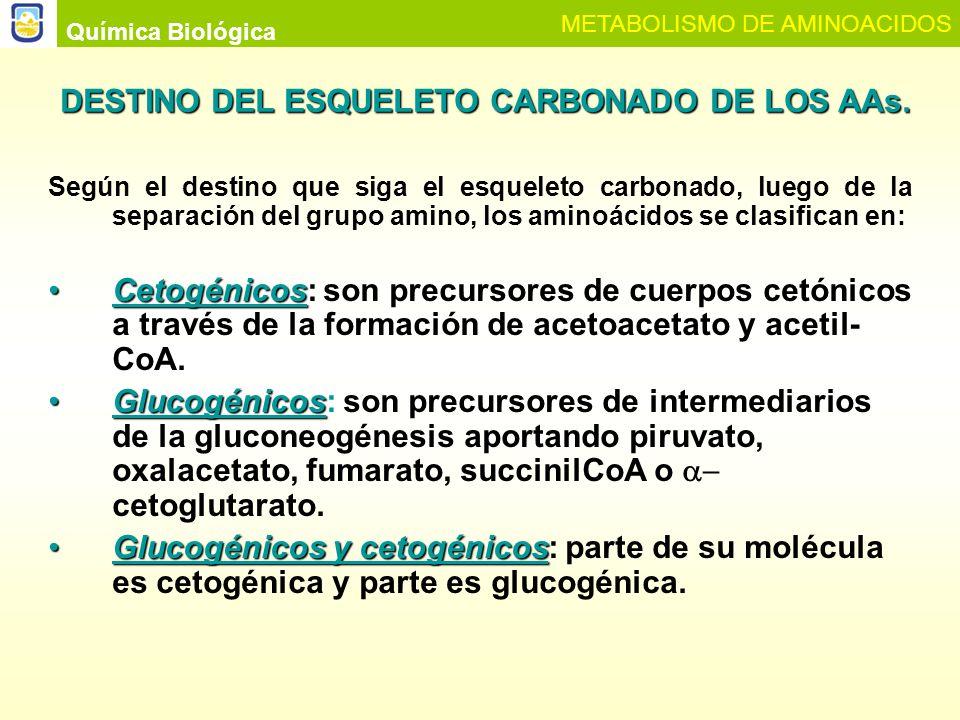 DESTINO DEL ESQUELETO CARBONADO DE LOS AAs.