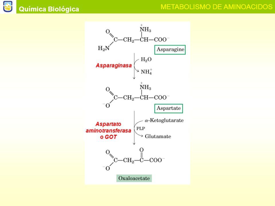 Aspartato aminotransferasa