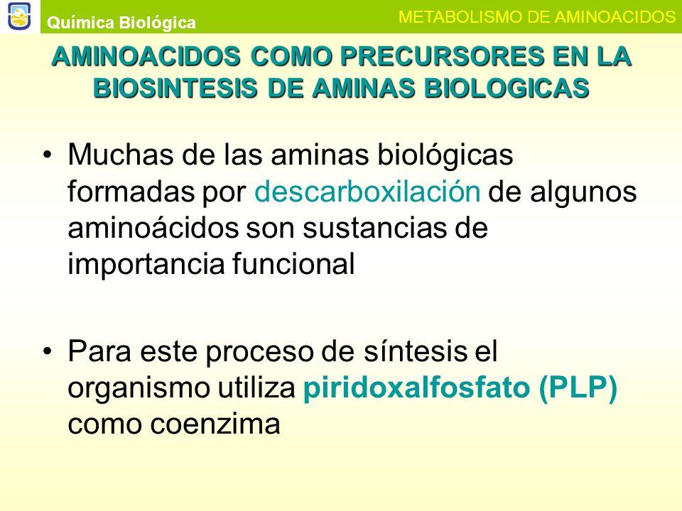 AMINOACIDOS COMO PRECURSORES EN LA BIOSINTESIS DE AMINAS BIOLOGICAS