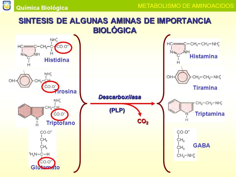 SINTESIS DE ALGUNAS AMINAS DE IMPORTANCIA BIOLÓGICA