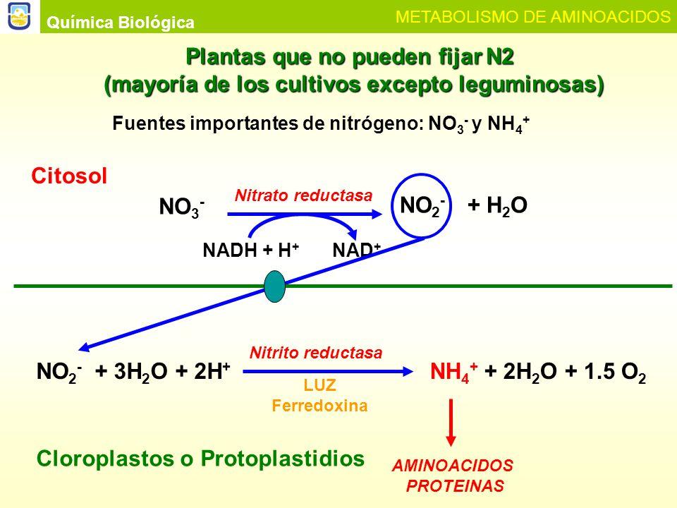 Plantas que no pueden fijar N2