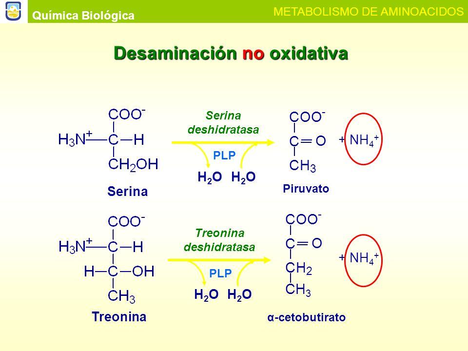 Treonina deshidratasa