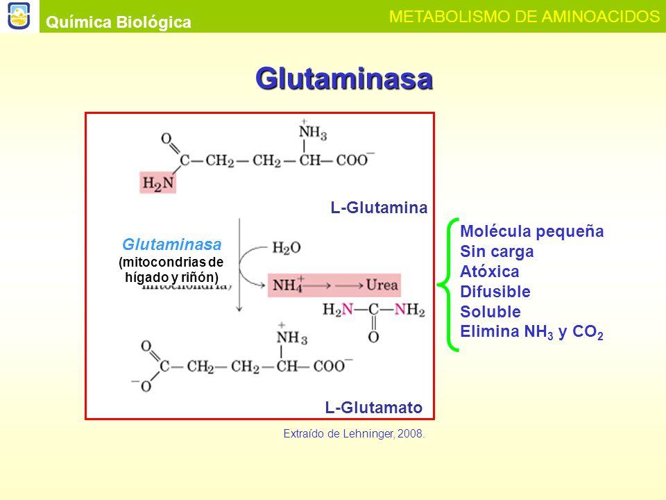 (mitocondrias de hígado y riñón)