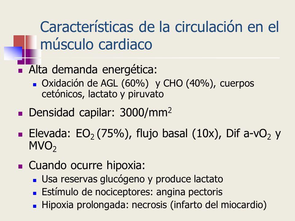 Características de la circulación en el músculo cardiaco