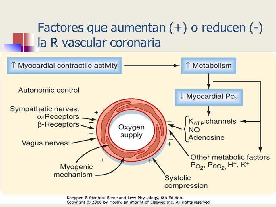 Factores que aumentan (+) o reducen (-) la R vascular coronaria