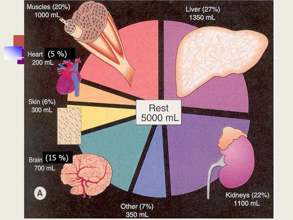 (5 %) Cerebro es un 2% del peso corporal pero recibe un 15% del gasto cardiaco.