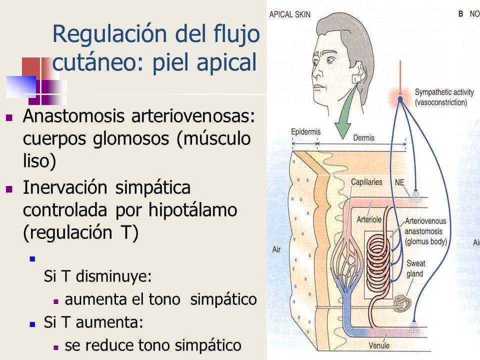 Regulación del flujo cutáneo: piel apical