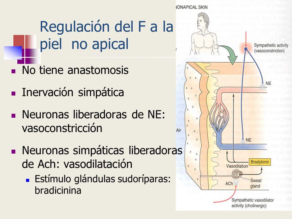 Regulación del F a la piel no apical