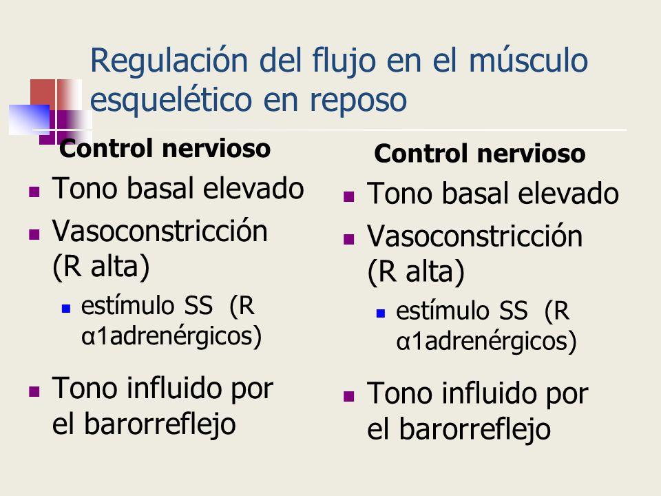 Regulación del flujo en el músculo esquelético en reposo