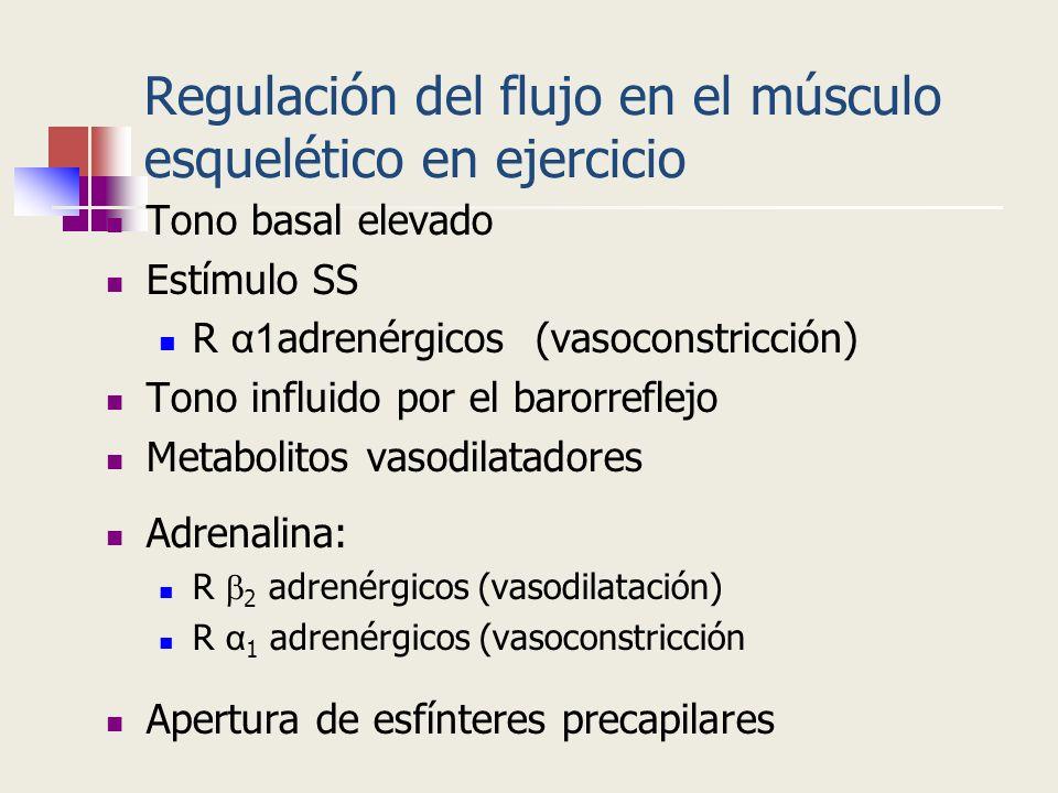 Regulación del flujo en el músculo esquelético en ejercicio