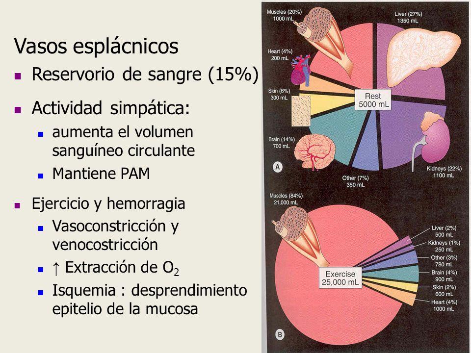 Vasos esplácnicos Reservorio de sangre (15%) Actividad simpática: