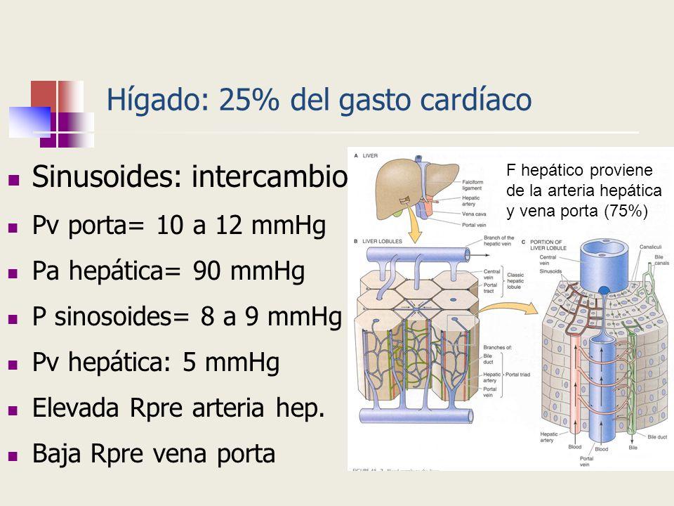 Hígado: 25% del gasto cardíaco
