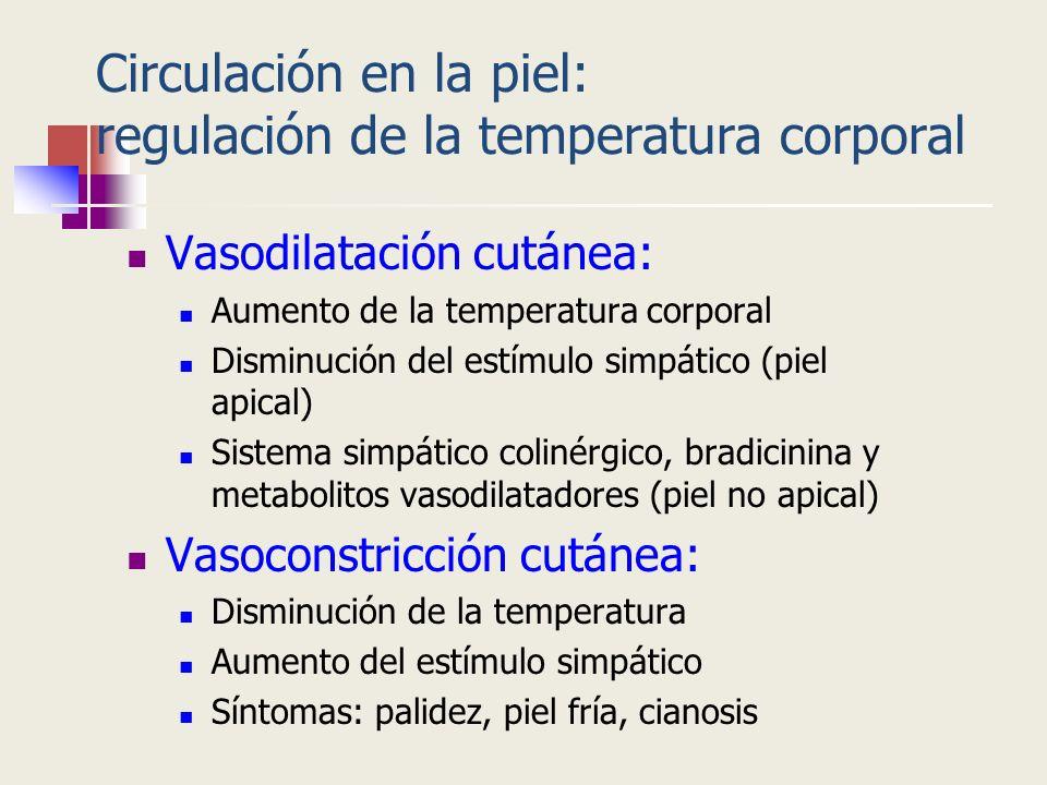Circulación en la piel: regulación de la temperatura corporal