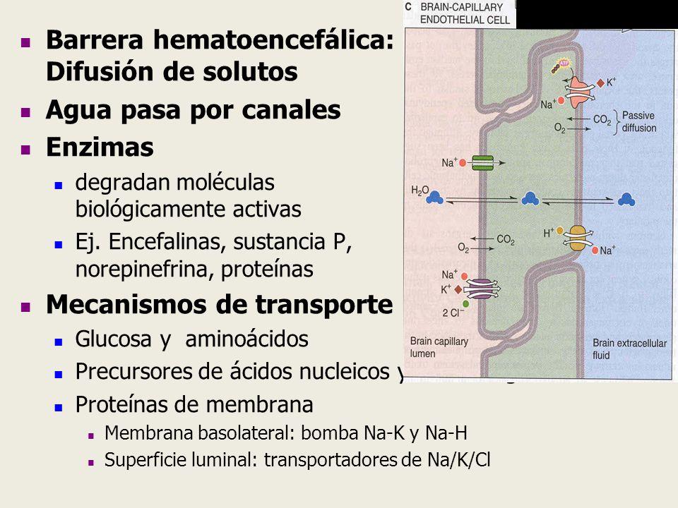 Barrera hematoencefálica: Difusión de solutos Agua pasa por canales