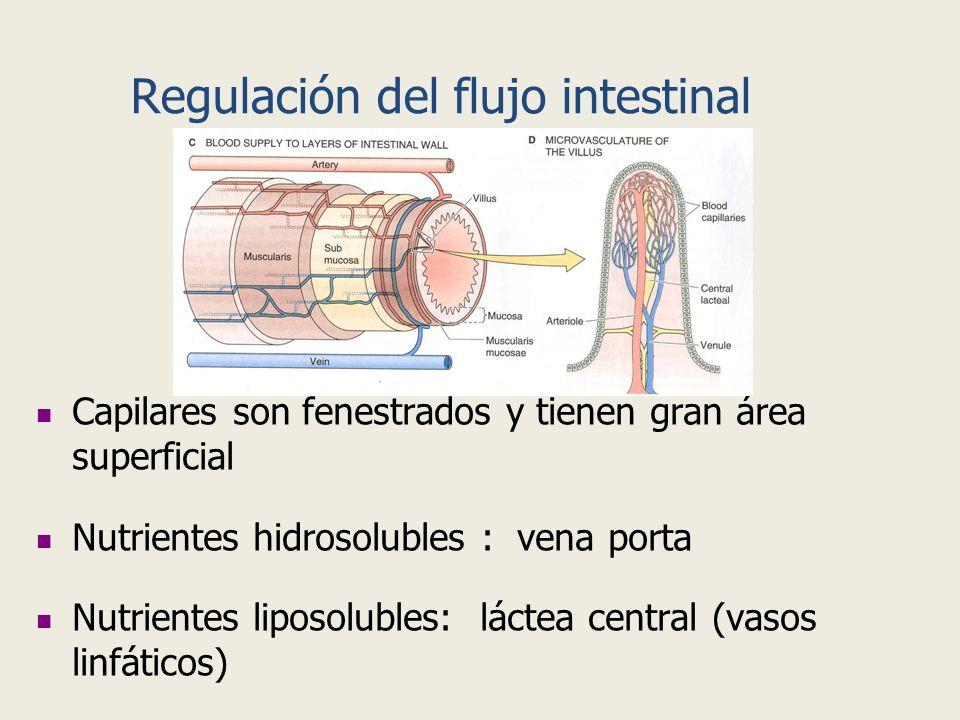 Regulación del flujo intestinal