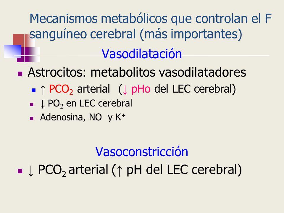Astrocitos: metabolitos vasodilatadores