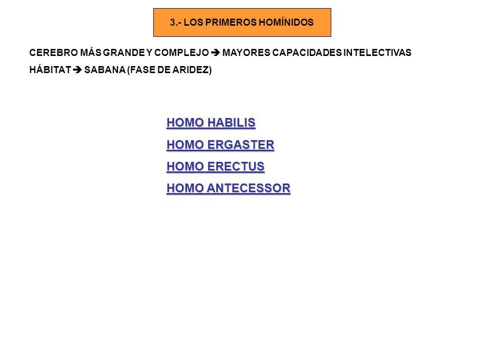 3.- LOS PRIMEROS HOMÍNIDOS
