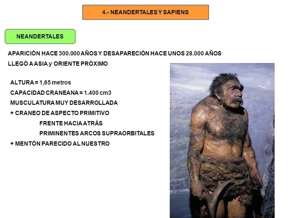 4.- NEANDERTALES Y SAPIENS