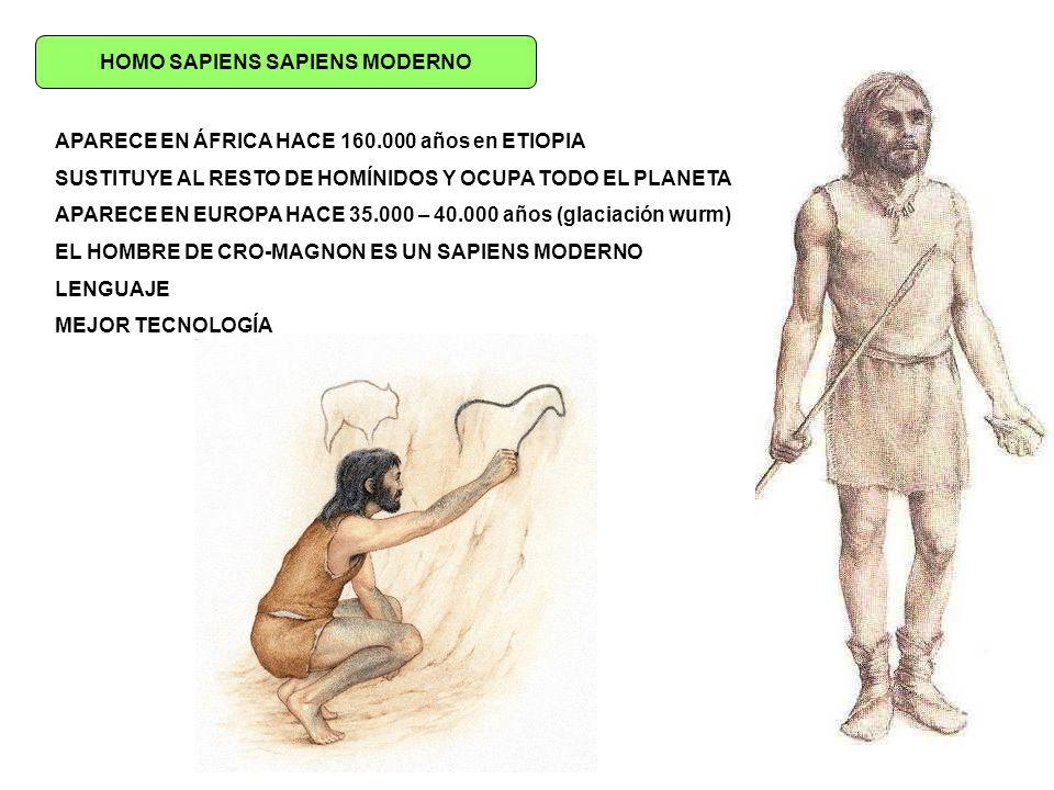 HOMO SAPIENS SAPIENS MODERNO