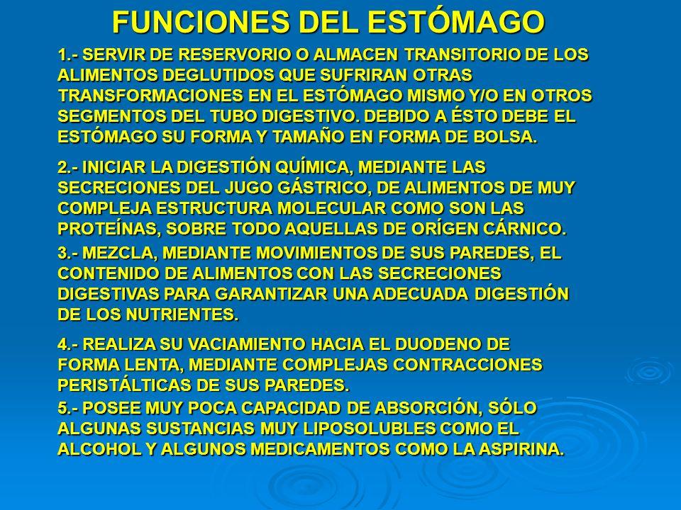 FUNCIONES DEL ESTÓMAGO