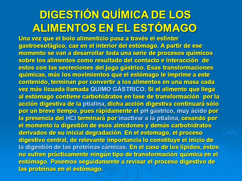 DIGESTIÓN QUÍMICA DE LOS ALIMENTOS EN EL ESTÓMAGO