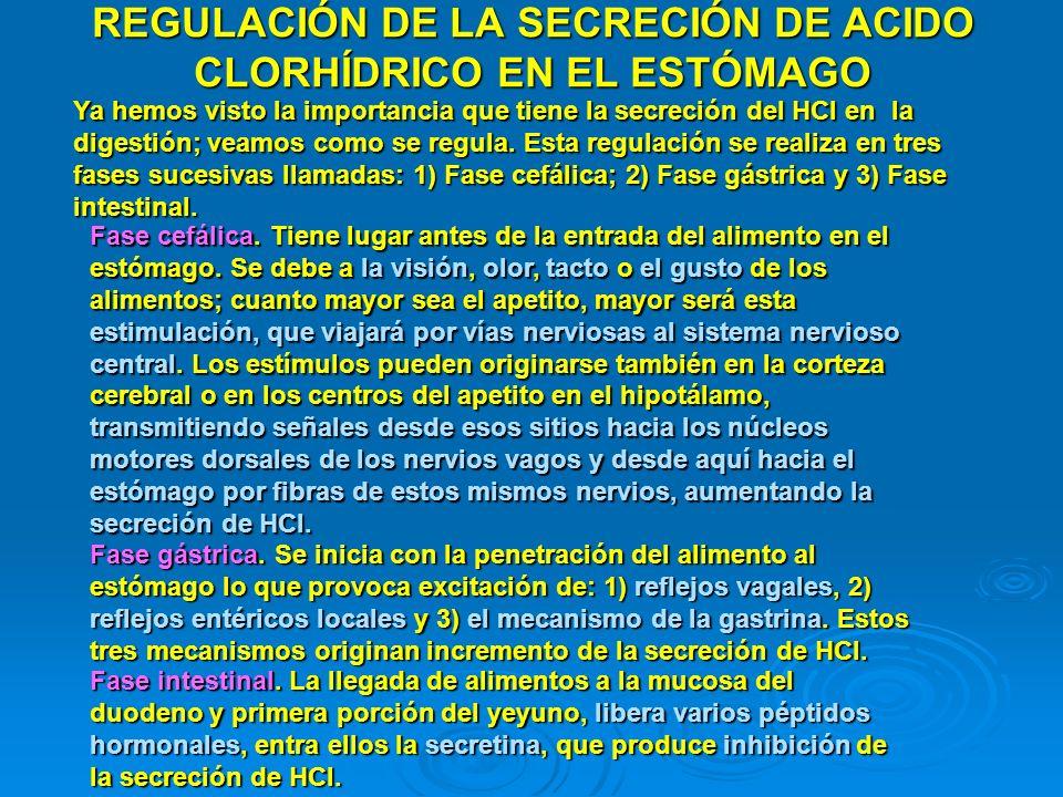 REGULACIÓN DE LA SECRECIÓN DE ACIDO CLORHÍDRICO EN EL ESTÓMAGO