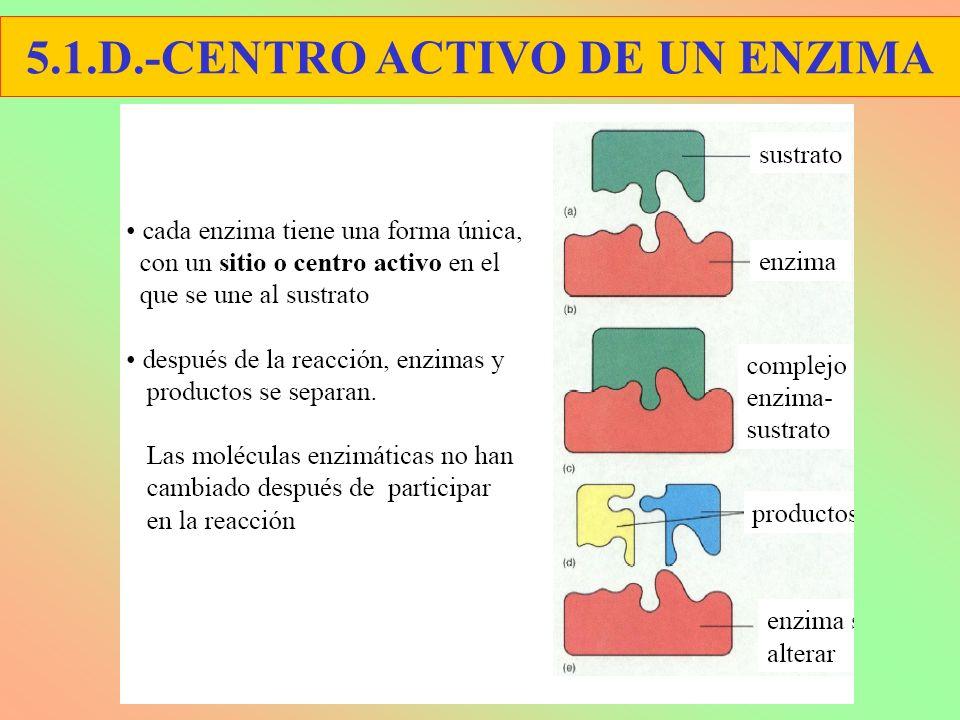 5.1.D.-CENTRO ACTIVO DE UN ENZIMA