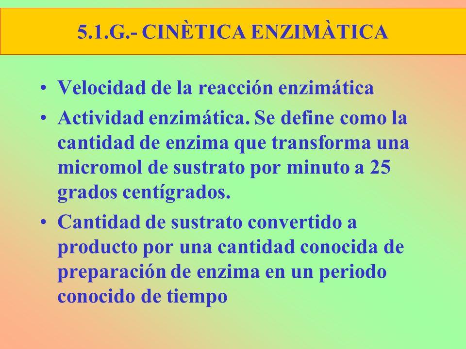 5.1.G.- CINÈTICA ENZIMÀTICA