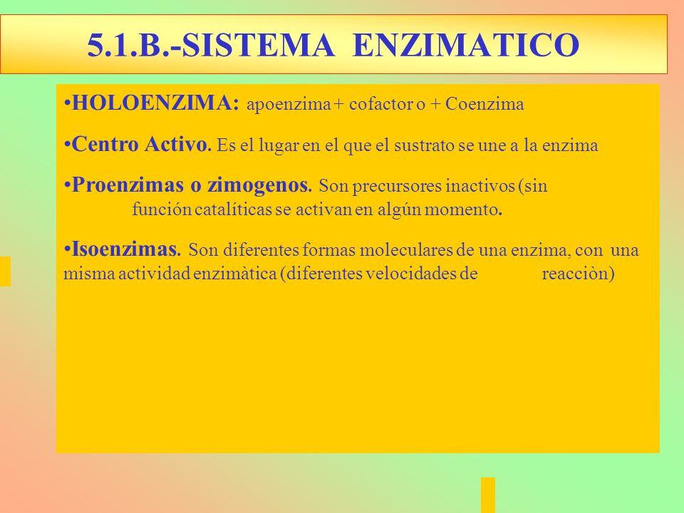 5.1.B.-SISTEMA ENZIMATICO HOLOENZIMA: apoenzima + cofactor o + Coenzima. Centro Activo. Es el lugar en el que el sustrato se une a la enzima.