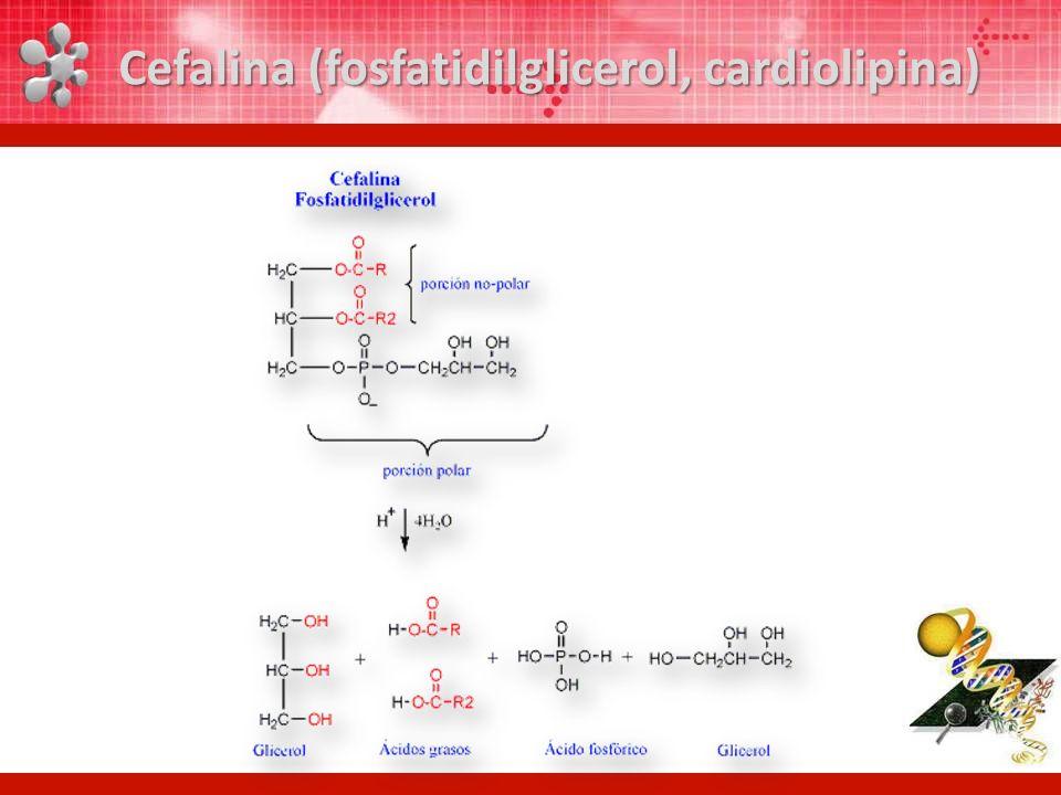 Cefalina (fosfatidilglicerol, cardiolipina)