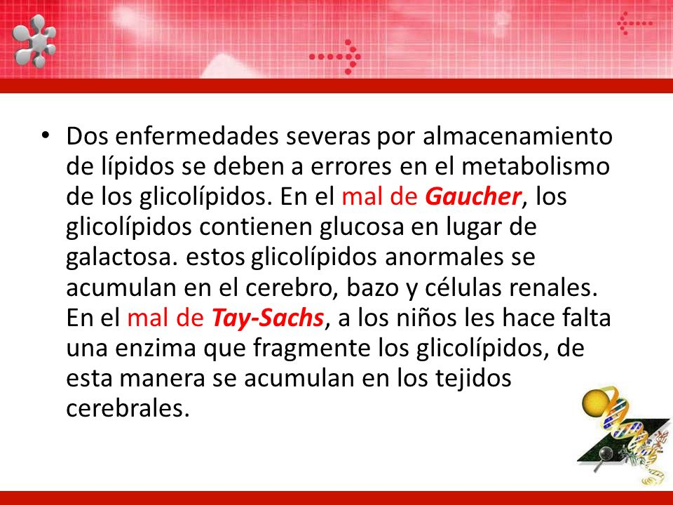 Dos enfermedades severas por almacenamiento de lípidos se deben a errores en el metabolismo de los glicolípidos.