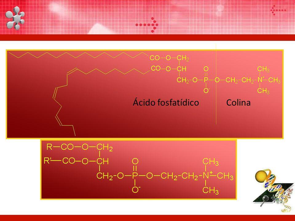 Ácido fosfatídico Colina