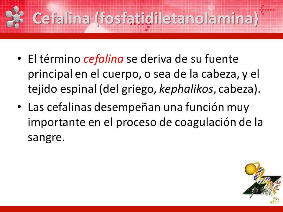 Cefalina (fosfatidiletanolamina)