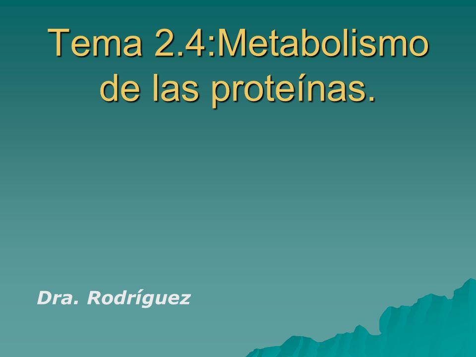 Tema 2.4:Metabolismo de las proteínas.