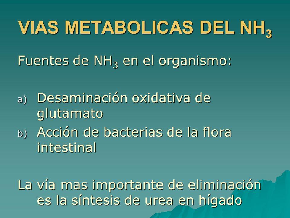 VIAS METABOLICAS DEL NH3
