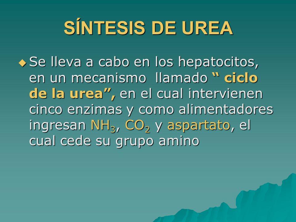 SÍNTESIS DE UREA