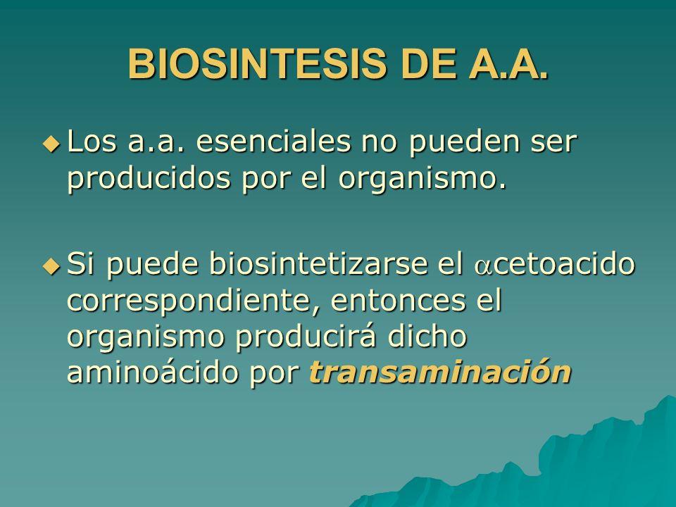 BIOSINTESIS DE A.A. Los a.a. esenciales no pueden ser producidos por el organismo.