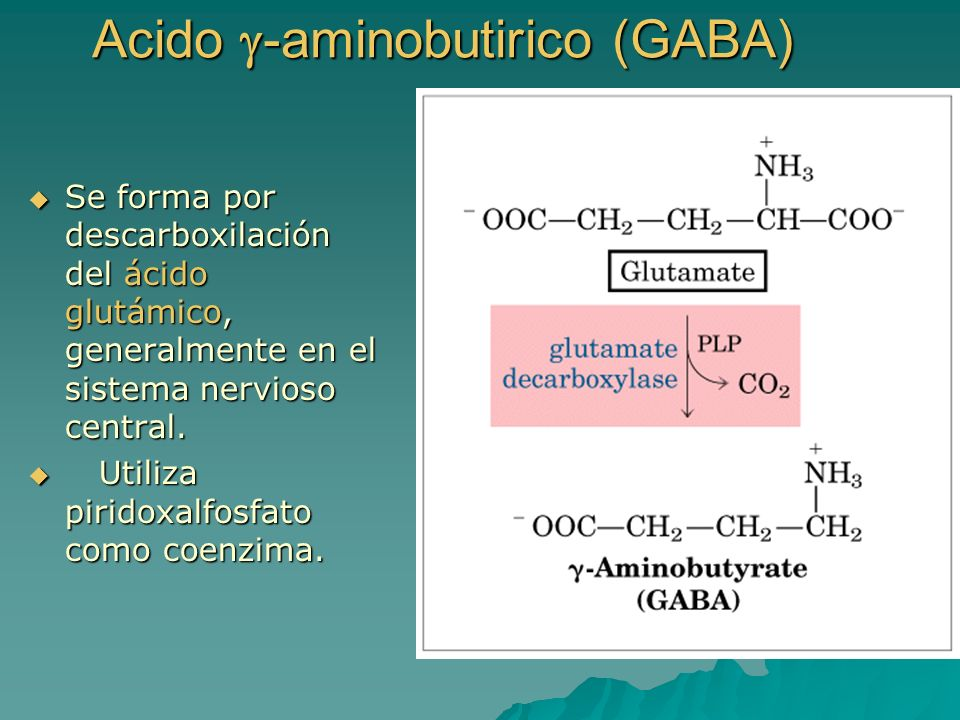 Acido g-aminobutirico (GABA)