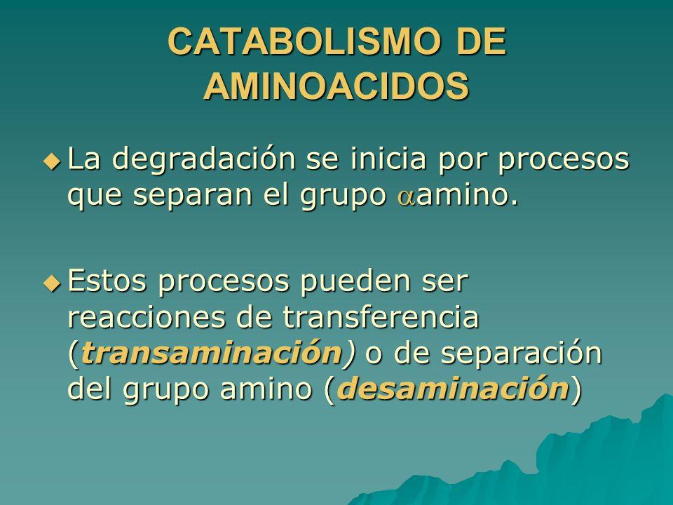 CATABOLISMO DE AMINOACIDOS