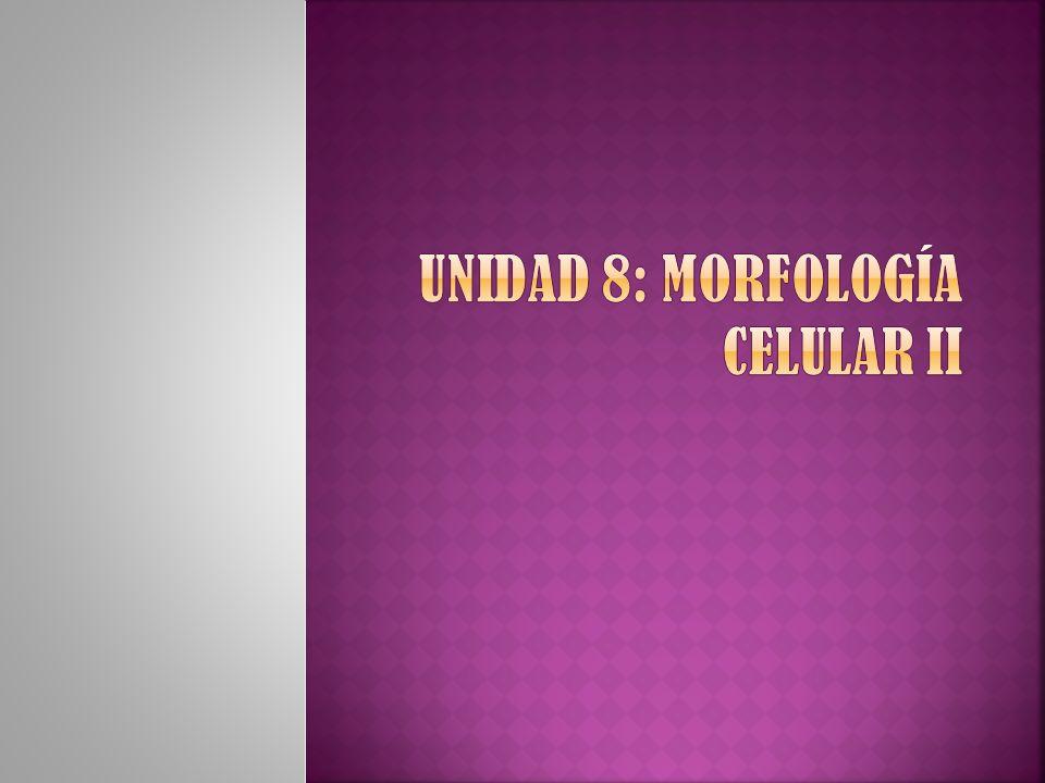 Unidad 8: Morfología celular II