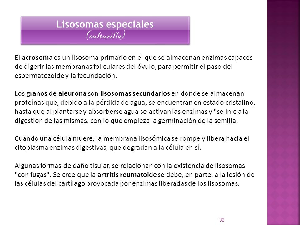 Lisosomas especiales (culturilla)