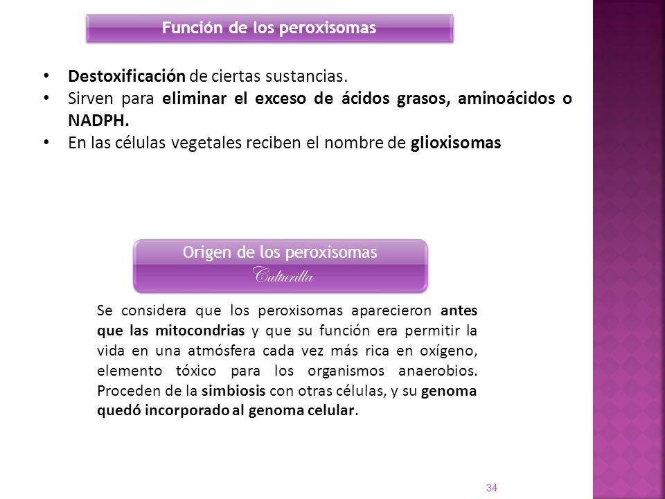 Función de los peroxisomas